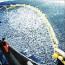 Stop Overfishing!