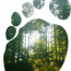 Our carbon footprints