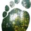 Our carbon footprints