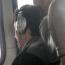 Escoltar música amb auriculars provoca sordesa?