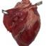 Dissecció del cor de be simulada
