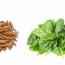Comparem la respiració dels animals i dels vegetals