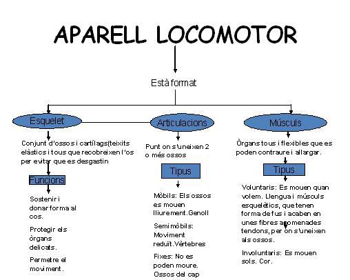 """Resultat d'imatges per a """"aparell locomotor esquema"""""""